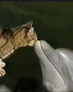 In Funny Animal Videos Hall of Fame. WATCH.