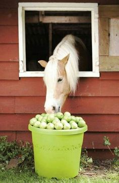 This horse is dreaming buckets of apples!
