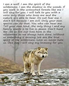 Look Into My Eyes Winter Wolf Wallpaper Wolves Animals Wallpapers) – Wallpapers and Backgrounds Beautiful Wolves, Animals Beautiful, Beautiful Creatures, Lone Wolf Quotes, Wolf Pack Quotes, Wolf Qoutes, Amor Animal, Pomes, Wolf Stuff