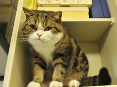 Maru in a shelf! :D