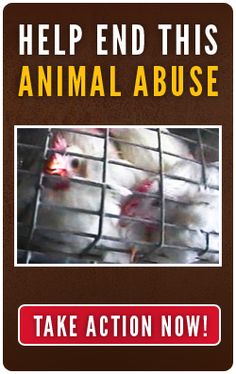 PLEASE RePin this and call out the McDonald's Corporation to end its use of eggs from hens confined in battery cages in the United States. We have a voice! Video on this site is graphic!