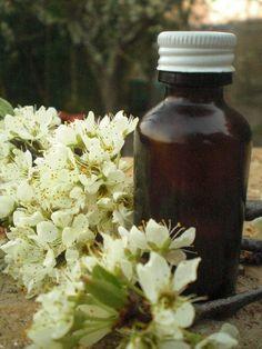 Real Sandalwood Patchouli  unisex Perfume Oil   20 ml by sofiart, $35.00