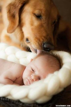 Perros y bebés