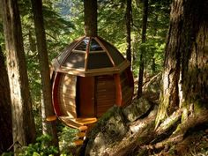 Novice Carpenter Builds a Secret, Illegal Tree House on Crown Land in Canada