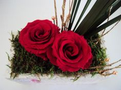 COMPOSITION ROSEx2 ROUGE PAPYRUS MOUSSE 25cm fleurs stabilisées
