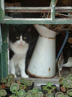 CAT IN WINDOW, vintage enamel  cream/milk pitcher