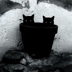 fotos-gatos-preto-branco-14