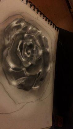 #rose #drawings