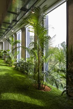 Green office spaces simulate parks to promote productivity and well-being - Iron Age Office - # Corporate Office Design, Modern Office Design, Office Interior Design, Office Interiors, Business Design, Corporate Offices, Office Designs, Office Plants, Garden Office