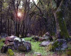 Paradise California by Dennis Begnoche - Photo taken in woods near Paradise California. Click on the image to enlarge.
