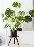 11 plantas de interior NO tóxicas para las mascotas
