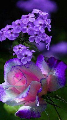 Wonderful Flowers, Beautiful Flowers Garden, Flowers For You, Beautiful Butterflies, Beautiful Roses, Pretty Flowers, Rose Flowers, Butterfly Wallpaper, Good Morning Images