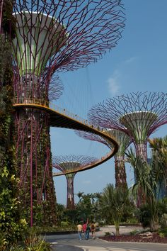 """""""Garden By The Bay - Super tree"""" Singapore by Eddie Seng"""