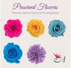 Preserved Wedding Flowers | Preserved Roses for DIY Weddings | Dried Flowers at Afloral
