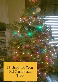 The Rural Economist: 16 Uses for your old Christmas Tree
