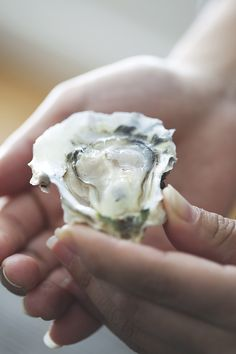 behold, the mighty (and delicious) oyster