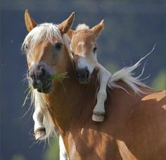 Mommy And Baby Horse