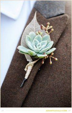 prendido de novio cactus