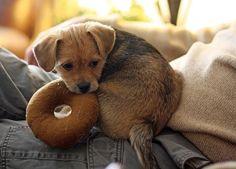 Saiba o porquê do seu filhote estar chorando e o que pode fazer para o acalmar, no nosso artigo! #cachorro #animais #dogs