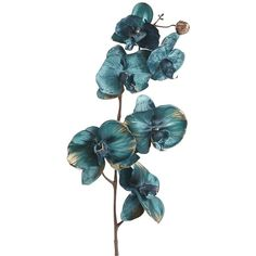 Pier One Phalaenopsis Orchid - Turquoise (110 UAH) ❤ liked on Polyvore featuring home, home decor, floral decor, flowers, fillers, decor, backgrounds, flowers and plants, pier 1 imports and turquoise home accessories