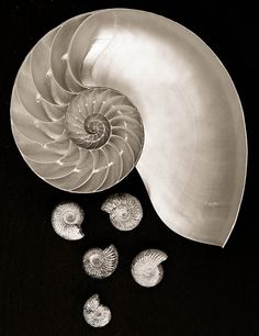The Golden Section Photography Portfolio, Macro Photography, Physics Theories, Beauty Planet, Golden Ratio, Fractals, Spirals, Art Prints, Artist