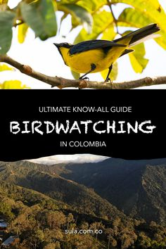 Click here and read the ultimate guide for bird watching in Colombia. Bird Watching, Conservation, Tourism, Reading, Travel, Colombia, Turismo, Viajes, Reading Books