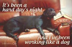 Labradors.com Fun Foto!