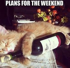 Your weekend goals: | 18 Photos Wine Lovers Will Definitely Relate To