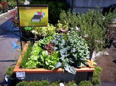 An easy raised garden bed kit with veggies ready to harvest!