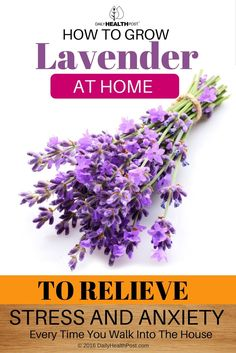 It may seem intimidating, but�lavender�is actually an incredibly forgiving plant, as long as you give it a little care and attention.