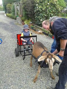 Goat Cart for child