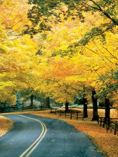 Fall foliage in New England on our Autumn in the Berkshires bike tour