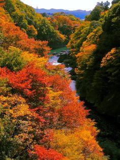 Autumnal tints - Takatsudo Gorges, Midori, Gunma, Japan