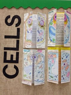 biology ideas Cards {and} Cardigans: Student Project Display Science Cells, Science Biology, Teaching Biology, Life Science, Science Education, Teaching Cells, Ap Biology, Forensic Science, Physical Science