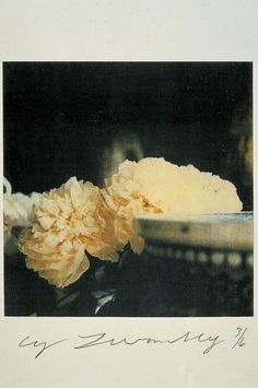 Peonies, Bassano in Teverina, 1980 | Cy Twombly