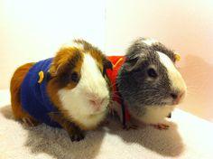 Star Trek Guinea Pig Costume. $5.00, via Etsy.