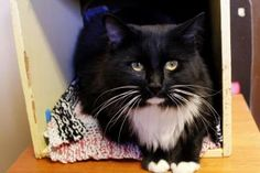 Update: Adopted :-) Oreo has been adopted from the Seattle Humane Society