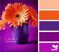 purple orange color scheme