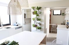emerald and may.: DIY - How To Grow Herbs Indoors
