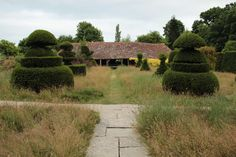 Great Dixter Topiary Lawn with wild flower meadow after it's finished flowering.