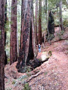 Skyline to the Sea Trail, Santa Cruz Mountains, Los Gatos, California (click through to learn more about this hike)