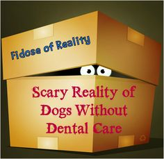 Scary Reality of Dog
