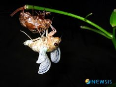 아름다운 매미 날개