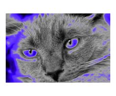 blue glow cat