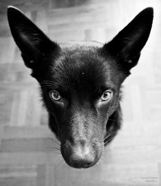 nice doggy