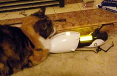 The cat has stolen the Portal gun! Help!