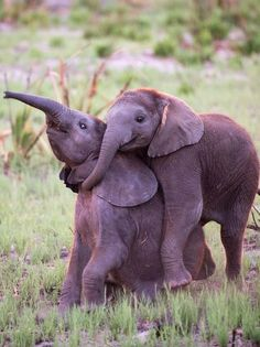 baby eles play time | andy biggs