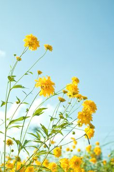 Yellow flowers 1 | Flickr - Photo Sharing!