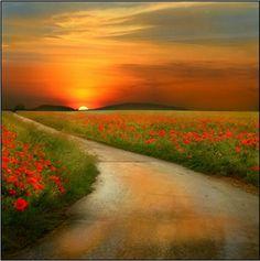 road. sun. flowers. cute