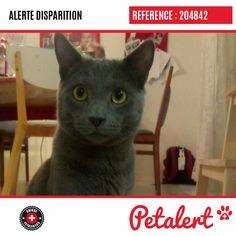 Cette Alerte (204842) est désormais close : elle n'est donc plus visible sur la plate-forme Petalert Suisse. Nous avons retrouvé notre animal Merci pour votre aide. Visible, Aide, Cats, Switzerland, Thanks, Shape, Animaux, Gatos, Cat